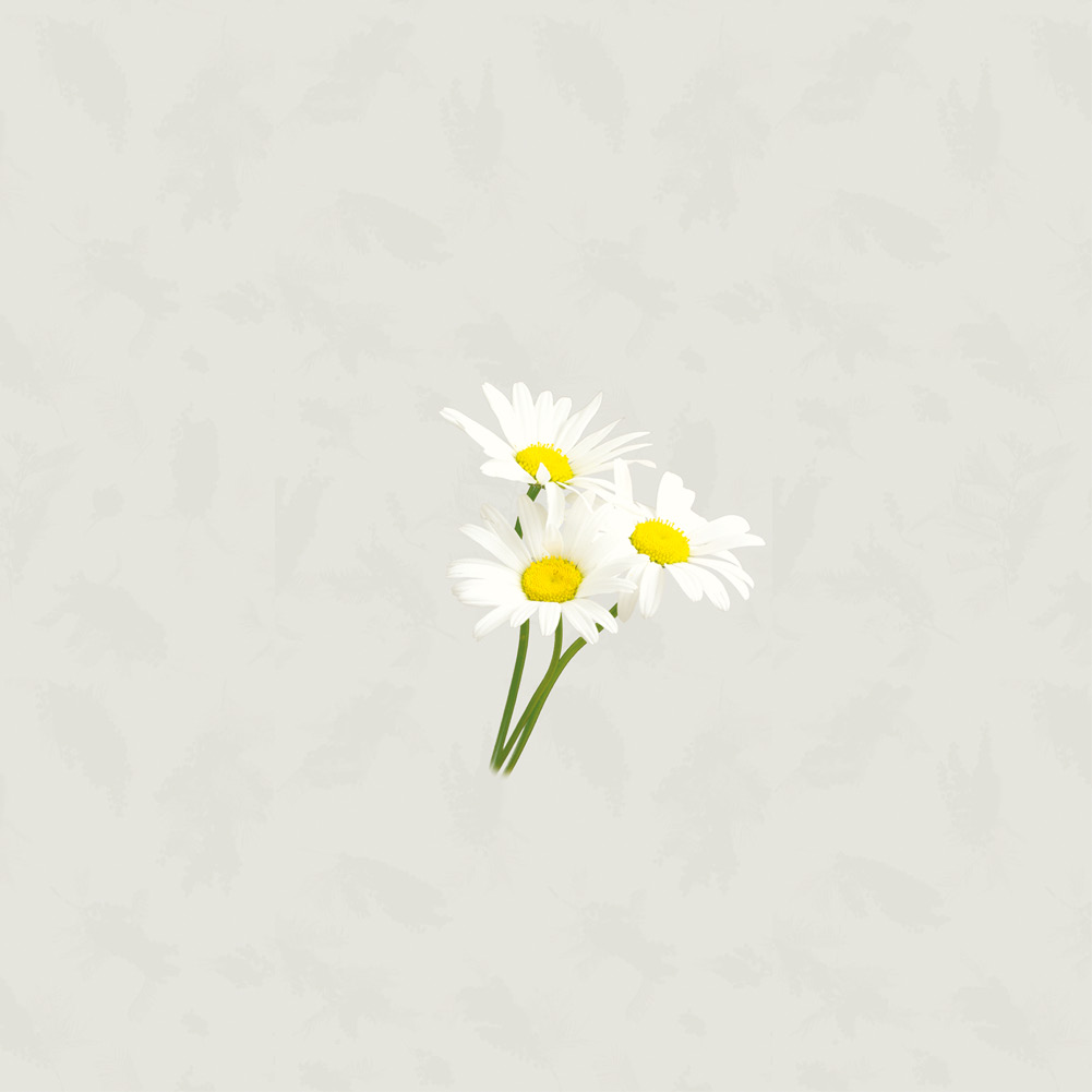 nyfan_1623_chamomile_detail